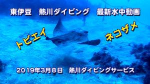 2019年3月8日 最新水中動画 トビエイ、ネコザメ、ソフトコーラル群生
