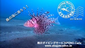 熱川の海は楽しいですよ〜!